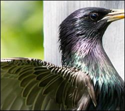 bird control Aldine