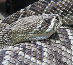 snake removal Aldine